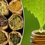 Top 10 Herbal Companies in India